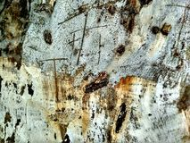Old barn wood background texture. stock images