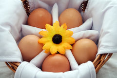 Natural Brown Eggs in a Basket. Five natural, brown eggs in a basket with a flower in the center royalty free stock photography