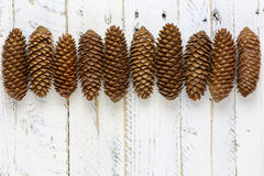 Natural Brown Pine Cones Line White Background Stock Images