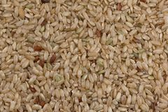 Natural brown rice. Evenly scattered and shot close up Stock Photo