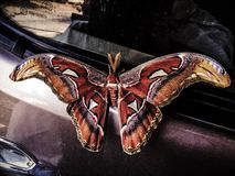 Natural butterfly animal style Thailand Royalty Free Stock Images