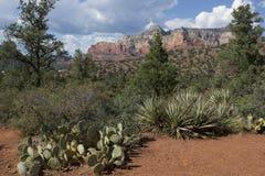 Natural Cactus Garden in Sedona Arizona stock photo