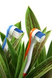 Natural care. Toothbrushes growing like flowers, over white (vertical), clipping path included Stock Photography