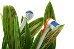 Natural care. Toothbrushes growing like flowers, over white (horizontal), clipping path included Stock Photography