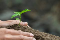 Natural care concepts and world preservation, global warming reduction. World Environment Day.  stock photo