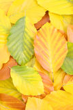 Natural carpet royalty free stock image