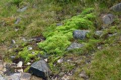Natural carpet of green moss Stock Photos