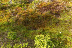 Natural carpet of moss Royalty Free Stock Photo