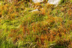 Natural carpet of moss Stock Photography