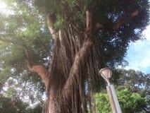 Natural cerca al templo de Angkor Wat Fotos de archivo