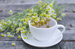 Natural chamomile tea stock image