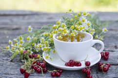 Natural chamomile tea royalty free stock photos