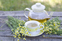Natural chamomile tea stock photography