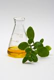 Natural chemistry. A yellow liquid in a flask with some leaves in the front isolated on a white background stock images