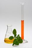 Natural chemistry. A yellow liquid in a flask and orange liquid in a cylinder with some leaves in the front isolated on a white background stock photo