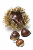 Natural chestnuts. One urchin with some chestnuts isolated on a white background Royalty Free Stock Images