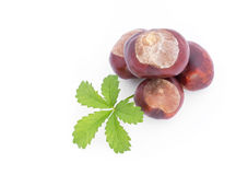 Natural chestnuts Royalty Free Stock Image