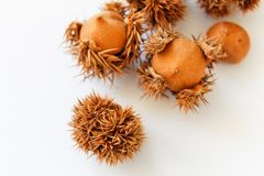 Natural chestnuts on white background Isolated.Chestnuts isolated. royalty free stock image