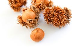 Natural chestnuts on white background Isolated.Chestnuts isolated. royalty free stock photos