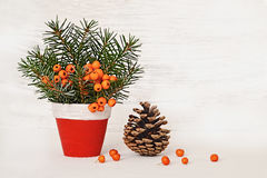Natural Christmas arrangement in clay pot and pine cone Royalty Free Stock Images