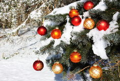 Natural Christmas Tree in Snow Stock Images