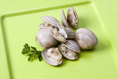 Natural clam Stock Photo