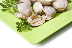 Natural clam Royalty Free Stock Photography