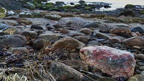 Natural coastal backgrund, seashore with rocks. Natural coastal background, a seashore with rocks, seaweed and sand by the water edge royalty free stock image