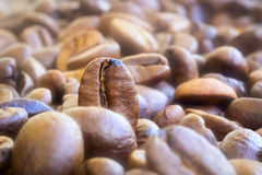 Natural coffee beans Stock Photo