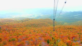 Natural color at the forest of Mount Hakkoda in autumn