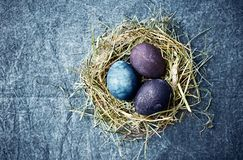 Natural colored Easter eggs in a hay nest. Flat lay. Copy space. Indigo blue background royalty free stock photos