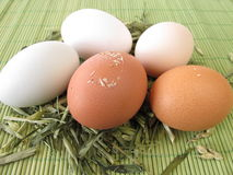 Natural colored eggs in straw Royalty Free Stock Photo