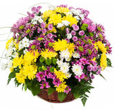Natural colorful asters in a basket Royalty Free Stock Images