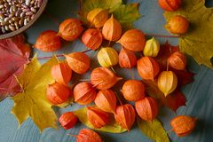 Physalis or Chinese Lantern Plants and maple leaves. Natural colorful autumn decorations: Physalis alkekengi and leaves Royalty Free Stock Photos