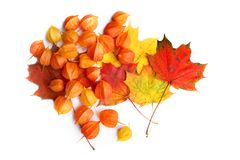 Physalis or Chinese Lantern Plants and maple leaves  on white background. Natural colorful autumn decorations: Physalis alkekengi and leaves Royalty Free Stock Image