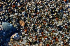 Natural colorful pebble in the water. Abstract background textur. E. Bright Sunny day Stock Photography