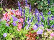 Natural colors Royalty Free Stock Photo