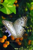 Natural colours. A butterfly and flowers royalty free stock photo
