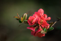 Natural colours of spring Stock Image
