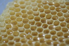 Natural comb of raw honey. Raw honey in a honeycomb of wax built by bees Stock Image