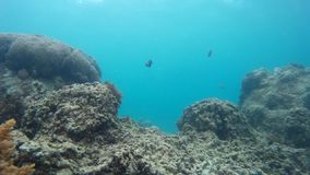 Natural coral reef, marine habitats stock footage