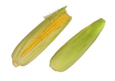 Natural corn on the cob Royalty Free Stock Photography