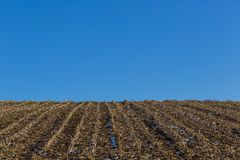 Natural corn field in winter, stubbles, blue sky, snow Stock Photography