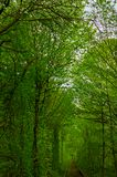 Natural corridor formed by trees aside railway Stock Photos