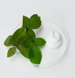 Natural cosmetics. The cream and herb image in a glass saucer Royalty Free Stock Image
