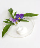 Natural cosmetics. The cream and herb image in a glass saucer Stock Photography