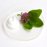 Natural cosmetics. The cream and herb image in a glass saucer Royalty Free Stock Photo