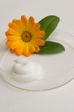 Natural cosmetics. The cream and herb image in a glass saucer Stock Photos