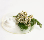 Natural cosmetics. The cream and herb image in a glass saucer Stock Photo