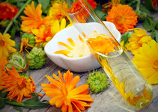 Natural Cosmetics from marigold. Face cream and other Natural Cosmetics from marigold royalty free stock photos